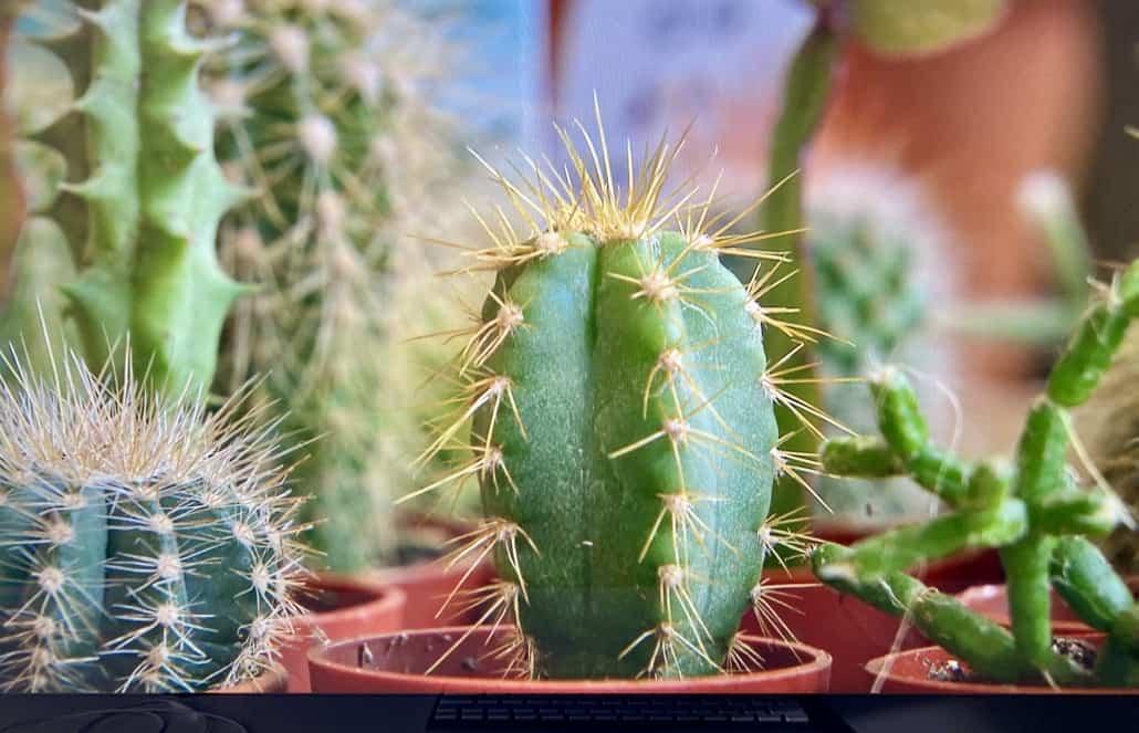 Cactussen van dichtbij gefilmd in een filmpje van Eigen Huis en Tuin